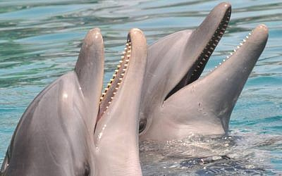 Illustrative photo of dolphins (photo credit: Jorge Novominsky/Flash 90)