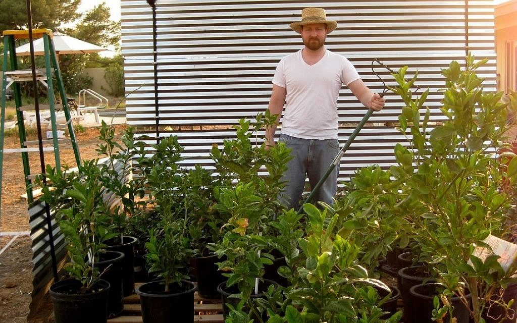 Matt Bycer hopes to turn his etrog farm in Scottsdale, Ariz.., into a lucrative competitor to its industry-leading counterparts in Israel. (Chavie Lieber/JTA)