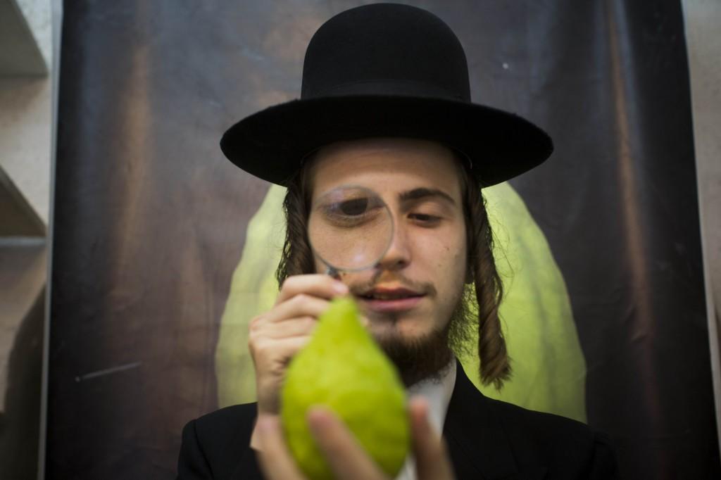 An ultra-Orthodox man examines a citron (etrog) in Jerusalem, September 27 (photo credit: Yonatan Sindel/Flash90)