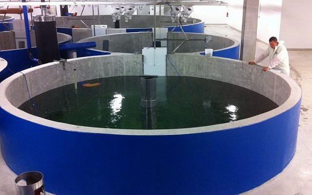 An indoor fish farm (Photo credit: AquaMaof/Yair Kachel PR)