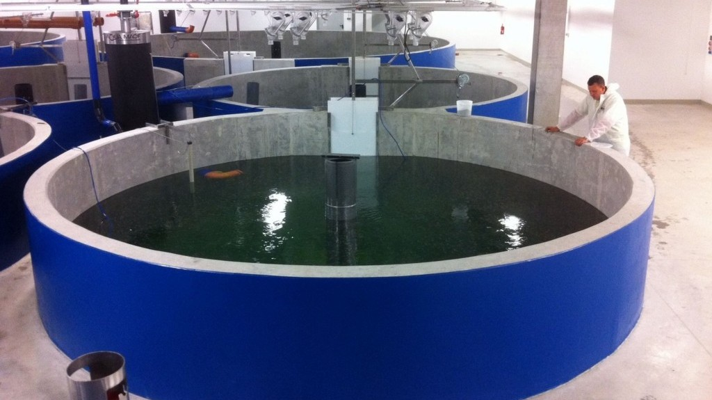 The israeli guest that 39 s welcome around the world the for Raising fish in a swimming pool