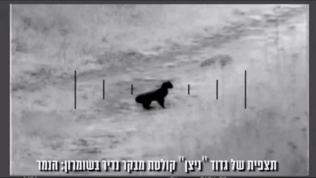 IDF cameras filmed a rare leopard in the northern West Bank (photo credit: screen capture idfspox1/Youtube)