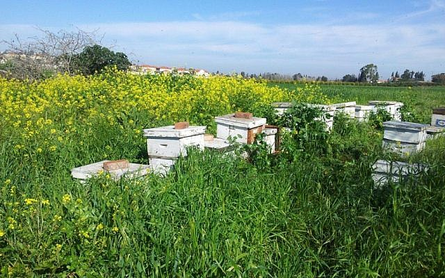 Hives in March, following a rainy winter (Courtesy Black Bear Honey/photo credit: Stephen Epstein)