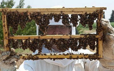 Raising queen bees (Courtesy Black Bear Honey/photo credit: Stephen Epstein)