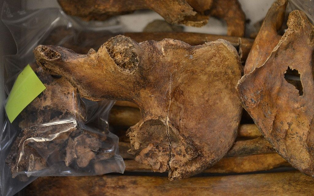 Bones recovered from a cemetery near Innsbruck, Austria, reveal that Nazi-era psychiatric patients were demeaned, starved, brutalized, and left to die. (Kerstin Joensson/AP)