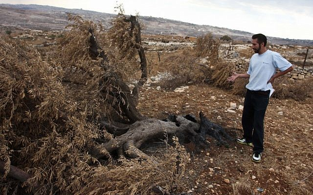 Illustrative photo of a Palestinian farmer standing next to burnt and uprooted olive trees near Ramallah (photo credit: Issam Rimawi/Flash90)