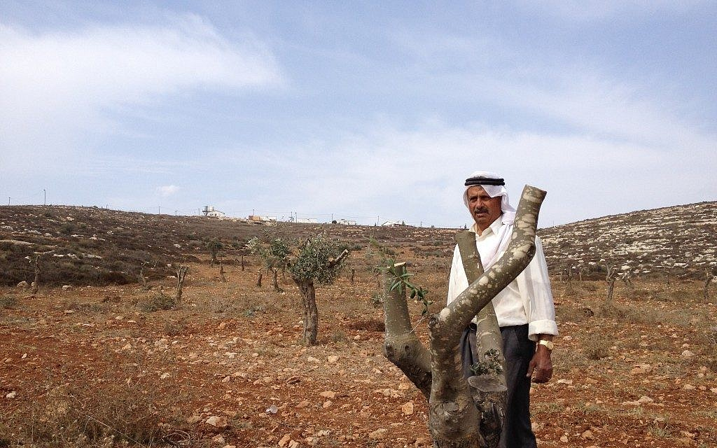 Jamil Nassan next to one of his vandalized trees with the outpost of Adei Ad in the background (Photo credit: Mitch Ginsburg/ Times of Israel)