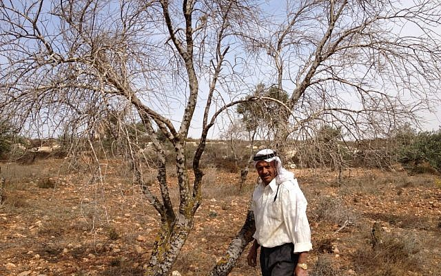 Jamil Nassan next to one of the desiccated trees (Photo credit: Mitch Ginsburg/ Times of Israel)