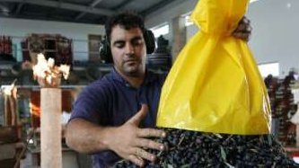 Sorting the organic olives at Melo Hatene (Courtesy Melo Hatene)