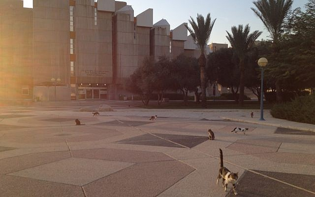 The campus of Ben-Gurion University (Times of Israel/Matti Friedman)