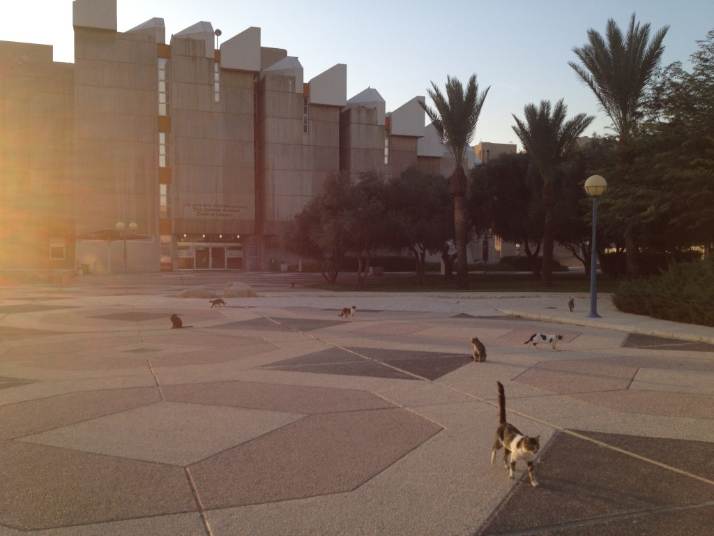 In the absence of humans, the Ben-Gurion University campus in Beersheba has been taken over by cats (Times of Israel/Matti Friedman)