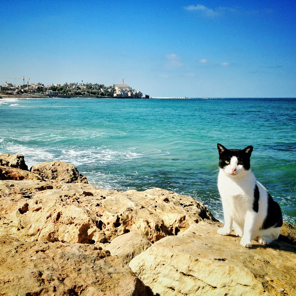 Tel Aviv beach (photo credit: VuTheara Kham)