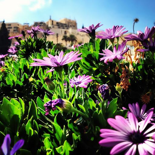 Jerusalem (photo credit: Joey Mena)