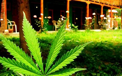 """Marijuana is """"great for praying,"""" says author Yoseph Needelman. """"The best way to use it, spiritually, is to share it."""" (Photo credit: CC BY/Pablo Evans via Flickr.com)"""