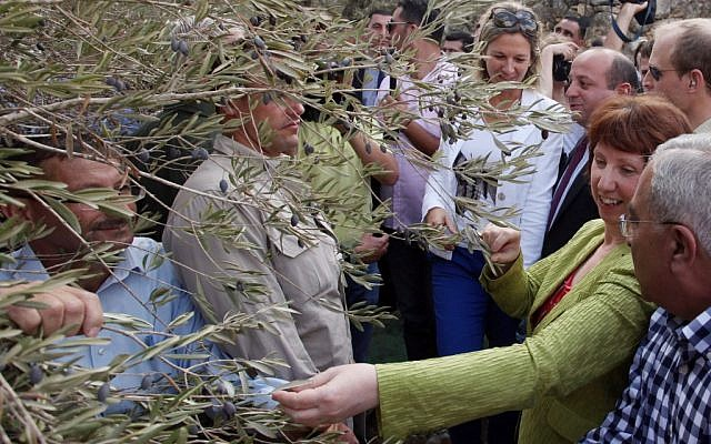 EU foreign policy chief Catherine Ashton, in green, at an olive harvest in the West Bank in October. (photo credit:  Issam Rimawi/Flash90)