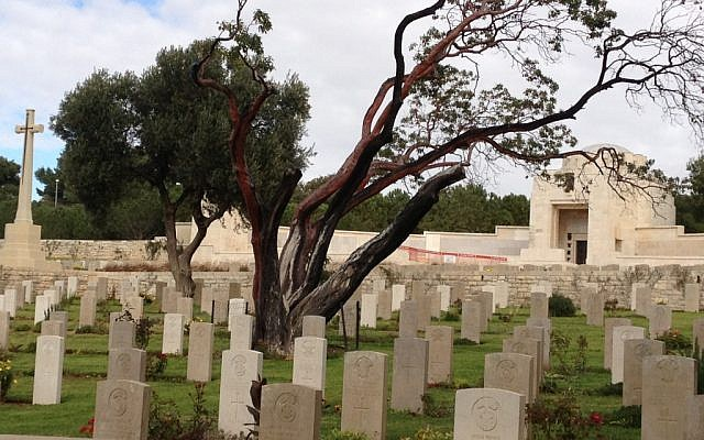 A look at the dying strawberry tree on Mount Scopus (photo credit: Jessica Steinberg/Times of Israel)