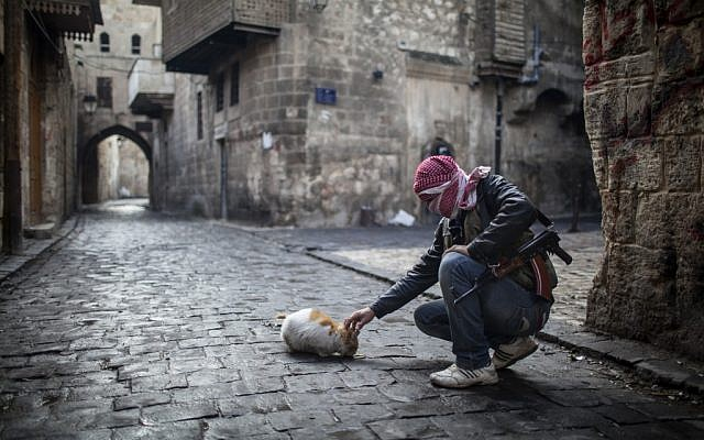 A Free Syrian Army fighter feeds a cat bread in the old city of Aleppo, Syria, Sunday, Jan. 6, 2013 (photo credit: AP/Andoni Lubaki)