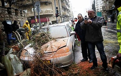 A car damaged by a fallen tree in Jerusalem, Monday (photo credit: Miriam Alster/Flash90)