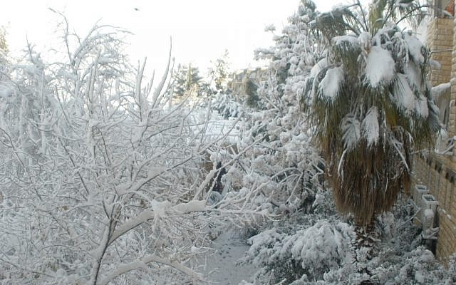 A palm tree tries on some white in the Gilo neighborhood. (photo credit: Gabe Fisher/Times of Israel staff)