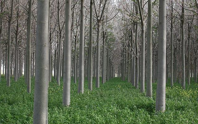 Trees in Kibbutz Ein Tzurim (Photo credit: Liron Almog/Flash90)