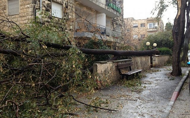 A fallen tree on Shalom Yehuda Street in Jerusalem's Talpiot neighborhood (photo credit: Jessica Steinberg/The Times of Israel)