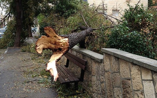 A fallen tree in Jerusalem, Monday (photo credit: Jessica Steinberg/The Times of Israel)