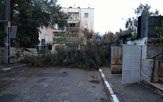 A fallen tree in Jerusalem's German Colony neighborhood on Monday morning (photo credit: Elie Leshem/Times of Israel)