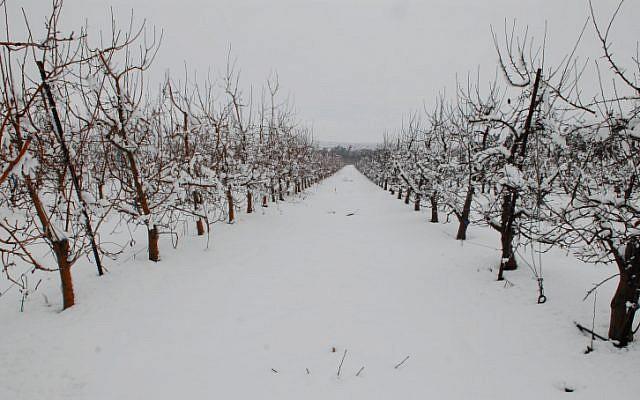 Spellman's kibbutz, Ein Zivan, earlier this winter (Photo credit: Hamad Almakt/ Flash 90)