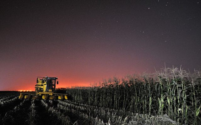 Cutting corn on the lower Golan Heights, near Kibbutz Mevo Hama (Photo credit: Shay Levy/ Flash 90)