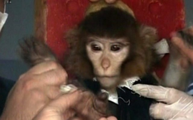 Iranian scientists surround a monkey before launching him into space, Jan. 28, 2013 (photo credit: AP Video)