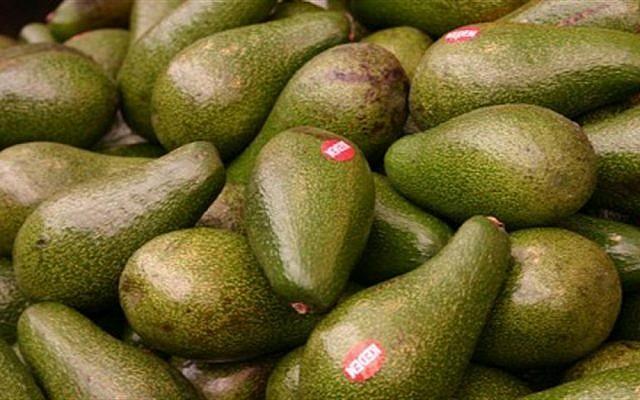 Avocados. (Yosef Silver, This American Bite)