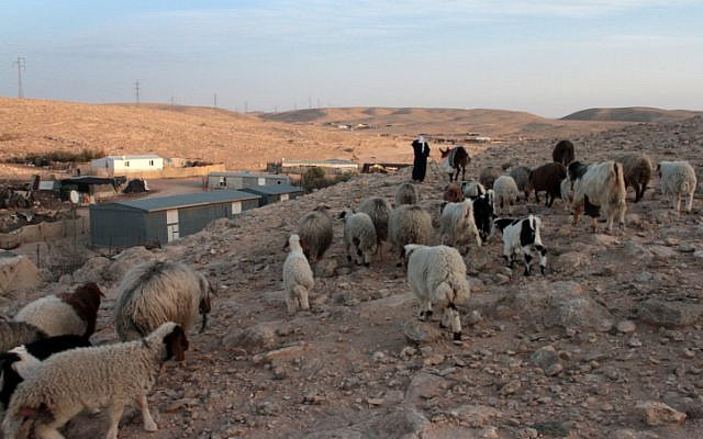 Bedouin woman herds sheep in her village in the Negev, February 2012. (photo credit: Alana Perino/FLASH90)