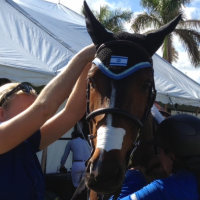 Like its owner, Goldstein's horse sports the Star of David during competitions. (Courtesy of Danielle Goldstein)