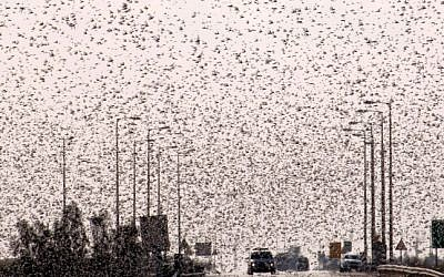 Swarms of locusts seen flying over Ramat Negev on Tuesday, March 5 (photo credit: Dudu Greenspan/Flash90)