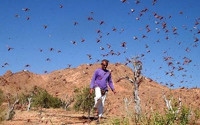 A locust swarm near Eilat in 2004 (photo credit: Yehuda Ben-Itah/Flash90)