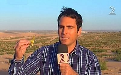 A TV reporter holds up one of the yellow locusts that landed in southern Israel on Sunday (photo credit: image capture from Channel 2)