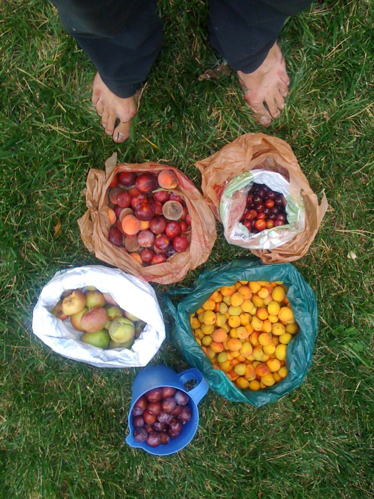 Produce gathered via Falling Fruit (photo credit: Ethan Welty)