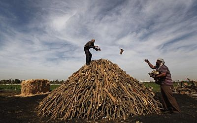 Palestinian workers collect wood to be burned and turned into coal at one of the few local charcoal manufacturing shops, east of Gaza City. In adapting to years of border blockades and shortages, Gazans have become experts at recycling and making new out of old, including turning scrap wood into charcoal to be used for barbecue grills and water pipes in local restaurants and coffee houses. (AP Photo/Hatem Moussa)