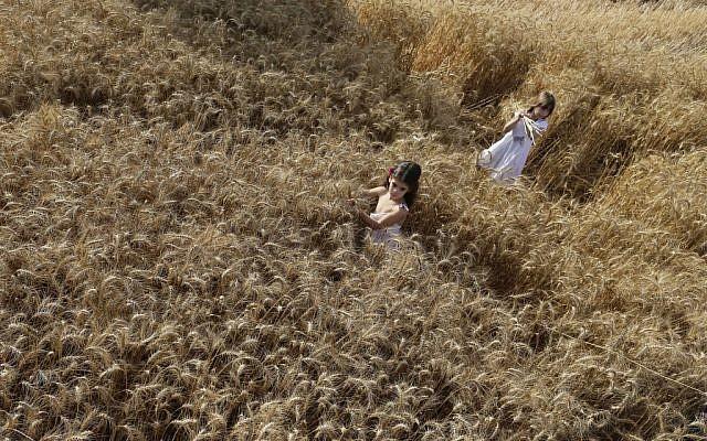 A wheat field at Kibbutz Nahal Oz near the border of the Gaza Strip (photo credit: Tsafrir Abayov/Flash 90)