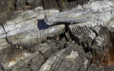Tree trunk by Dov Herzenberg (Courtesy Dov Herzenberg)