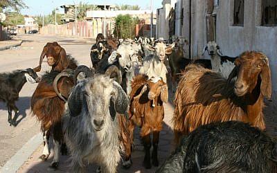 Life in Dahab (photo credit: Eliyahu Kamisher)