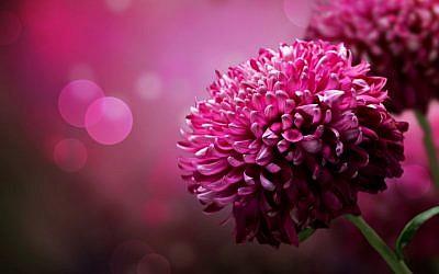 (illustrative flower image via Shutterstock)