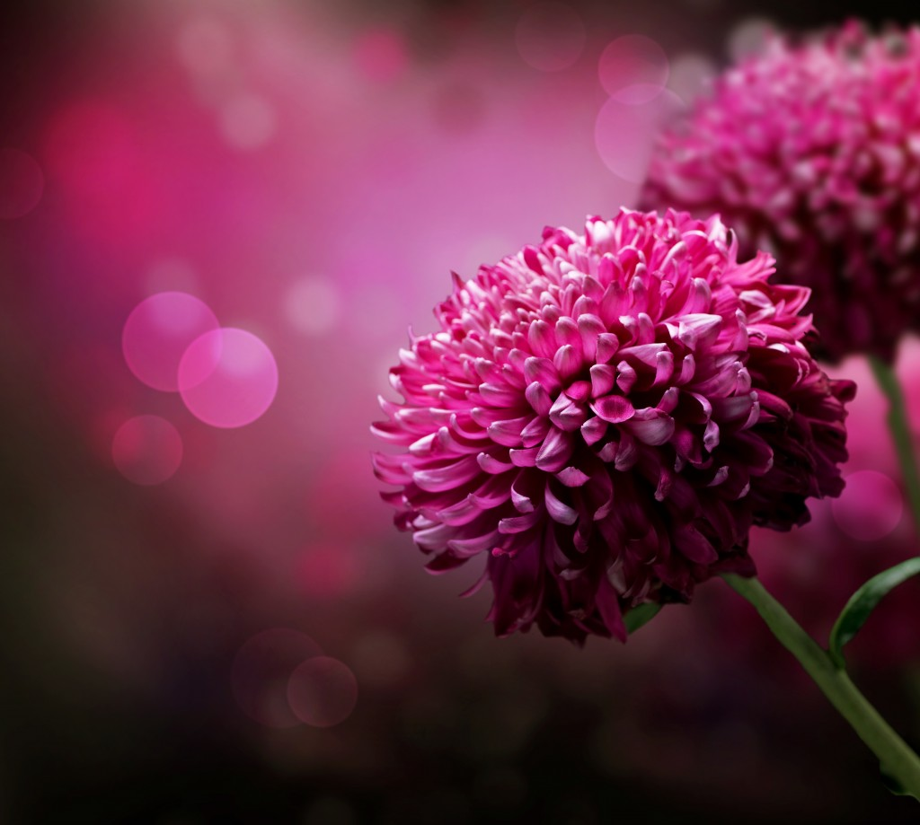 Jewish battered women shed happy tears on mothers day the times illustrative flower image via shutterstock izmirmasajfo