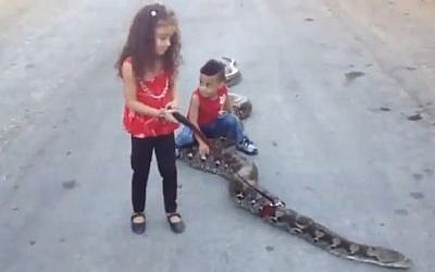 Two Ramallah children taking their pet snake for a walk. (photo credit: screen capture/YouTube)