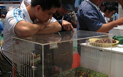 Visitors peer at the Bio-Bee display at the Fresh Agromashav show (Photo credit: Courtesy)