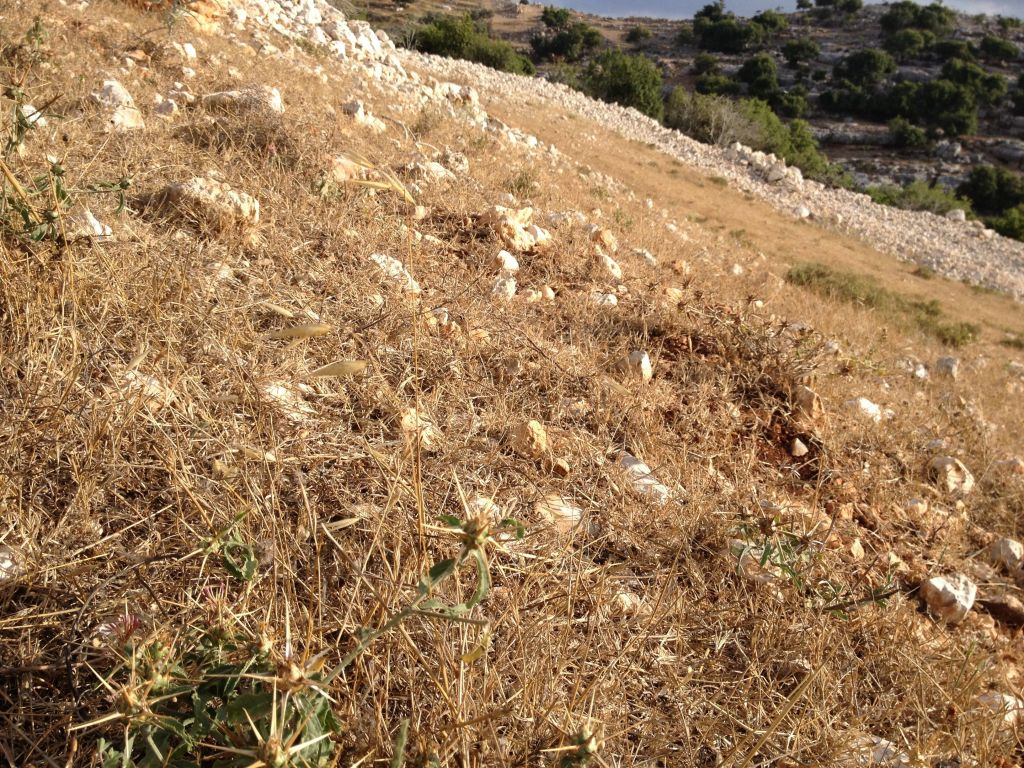 Walking toward Eagle Cliff, around the corner from Mizpe Hila (photo credit: Jessica Steinberg/Times of Israel)
