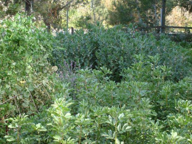 Maggie Rosenberg's organic garden in Nataf (Courtesy Maggie's Garden)