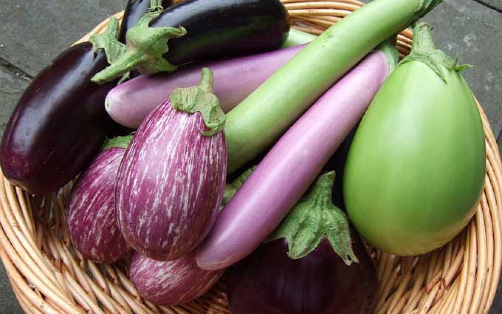 The eggplant harvest at Chubeza organic farm in Israel (Courtesy Chubeza)