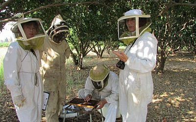 Vicky Soroker, far right, stands with a team of bee researchers on Tzrifin Farm. (photo by Debra Kamin)