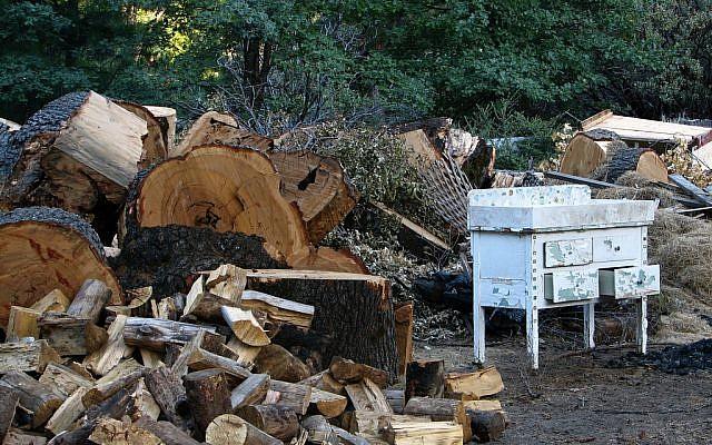 Fallen trees at Camp Tawonga. (photo credit: CC BY-SA Thinkpipes, Flickr)